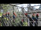 Попугаи из Парка Тайган